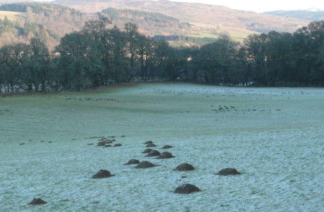 A profusion of molehills