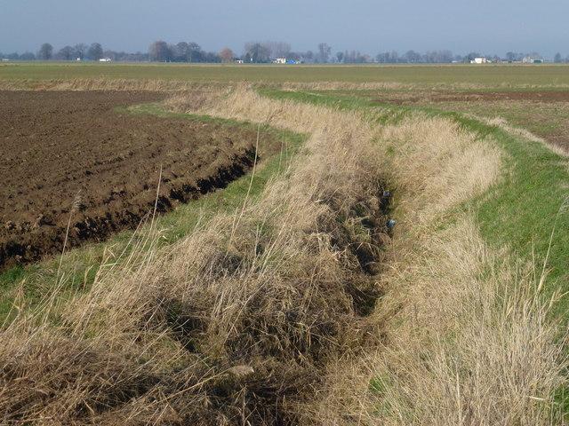 Ditch north of Sutton Bridge