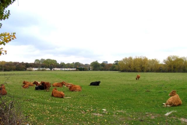 Fields by Lake Terrace