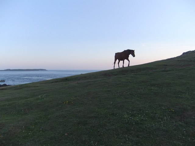 Pony near Wooltack Point, on a midsummer's evening