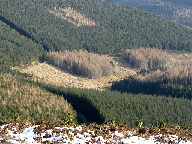 Forestry above the Holms Water