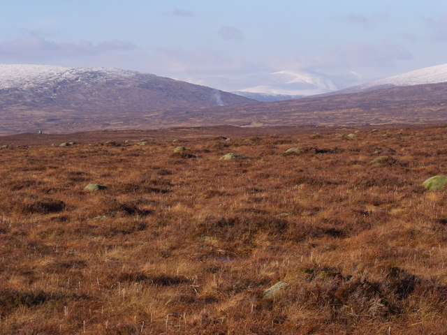 Sphagnum moss domes on Rannoch Moor