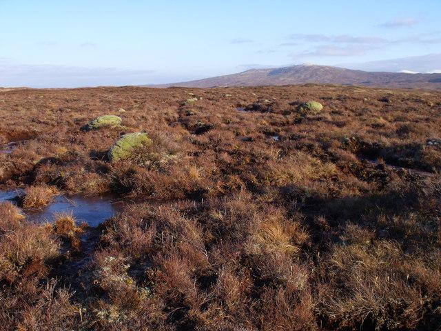 Domes of moss on Rannoch Moor