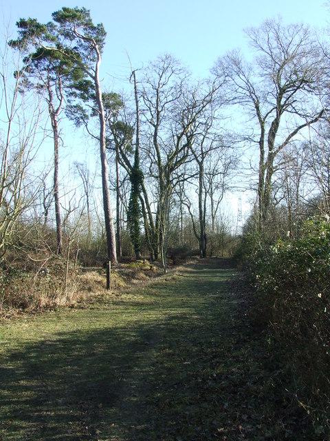 Ramsey Wood