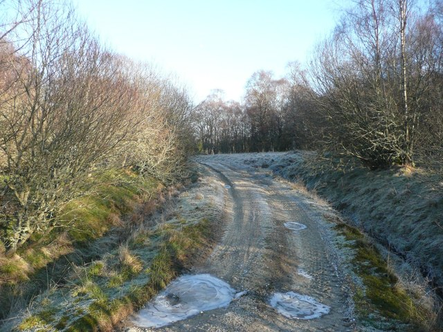 Forest / farm track on a frosty day