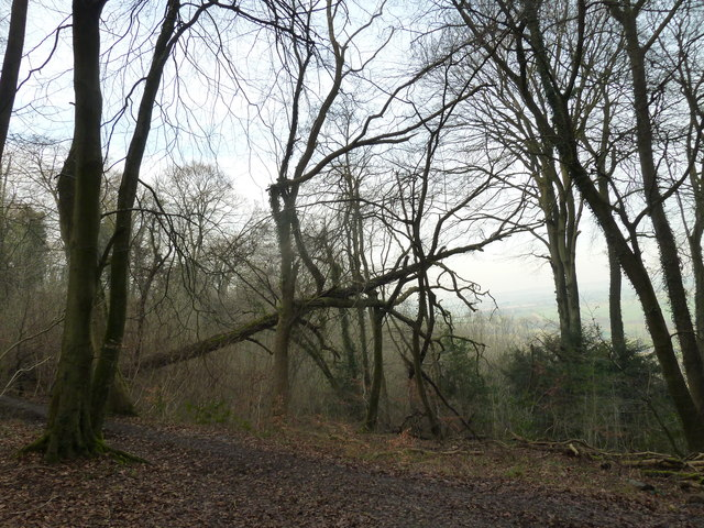 On the path from Selborne Hanger to Coneycroft Hill (b)