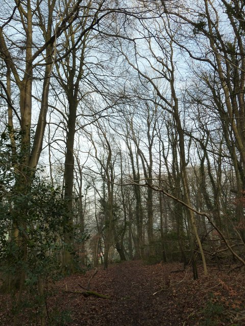 On the path from Selborne Hanger to Coneycroft Hill (d)