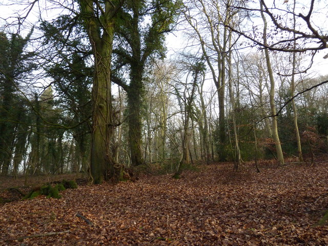 On the path from Selborne Hanger to Coneycroft Hill (j)