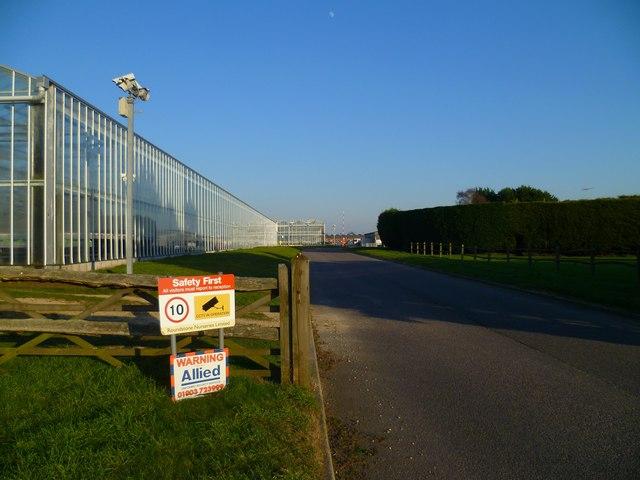 Road through Roundstone Nurseries near Runcton