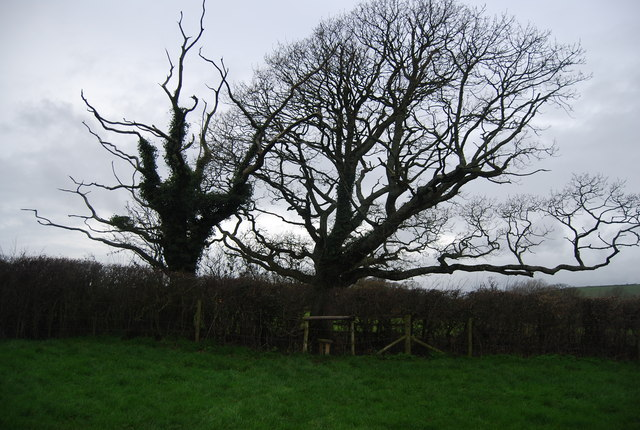 Trees and stile