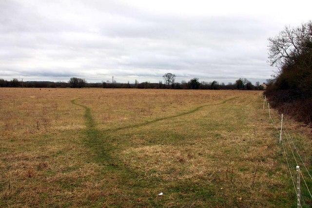 Field edge at Gosford