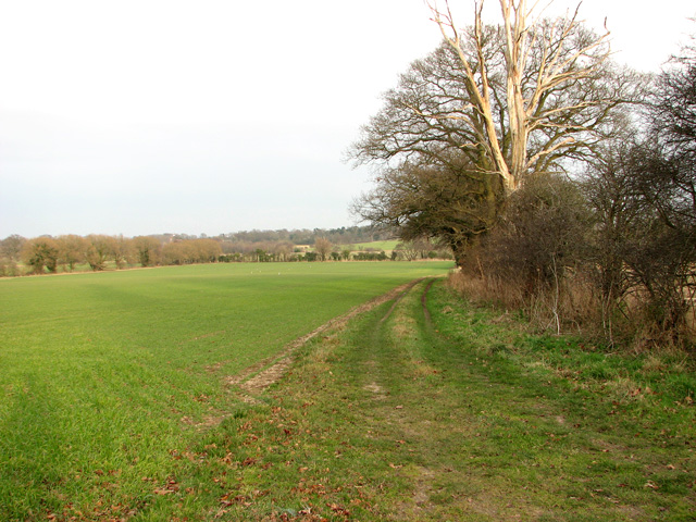 Farm track following field boundary hedge, Little Glemham