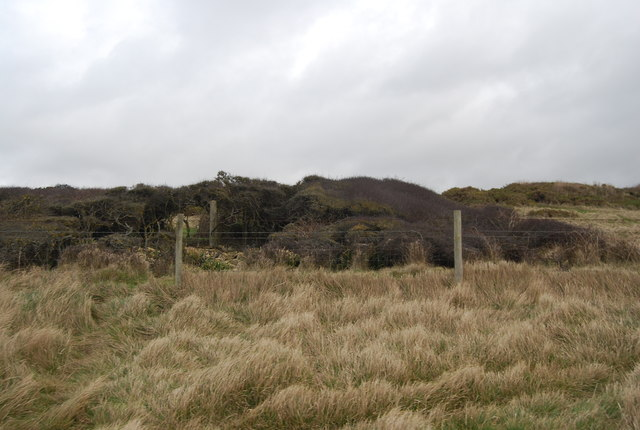 Bushes by the coastal path