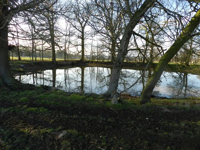 Pond in Hanbury Park
