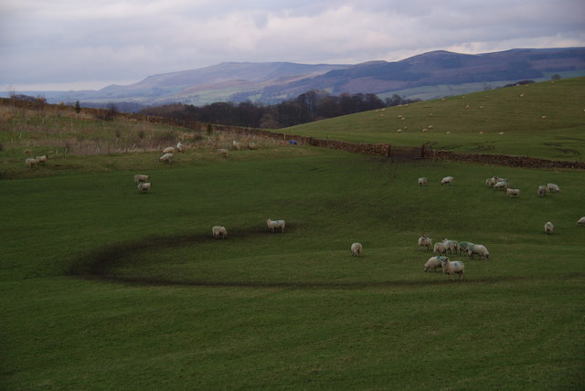 Sheep on Great Pasture Hill