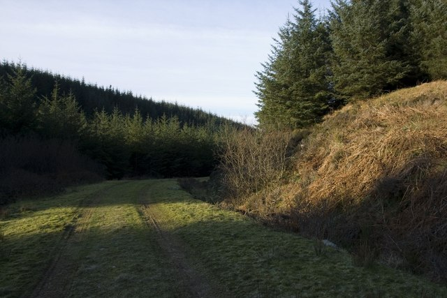Track through Cornabus Forest, Islay
