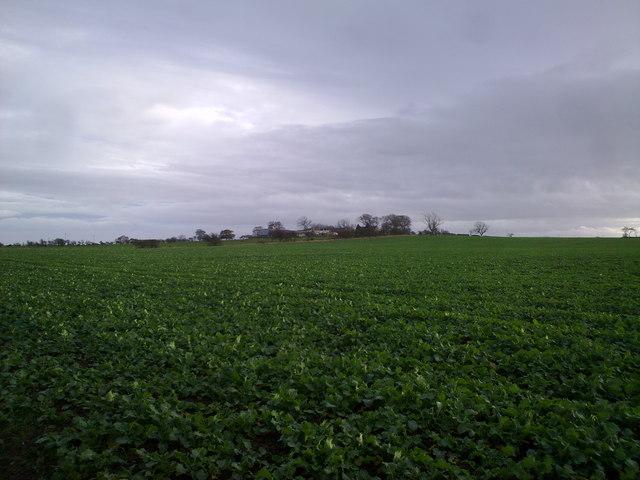 View across the fields East of Dinnington