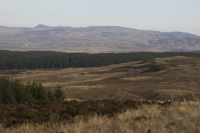At the edge of Cornabus Forest, Islay