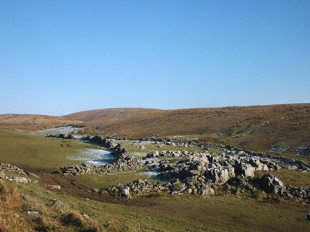 Pasture at Gill Rigg