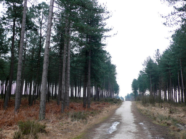 Forestry Track in Wareham Forest.
