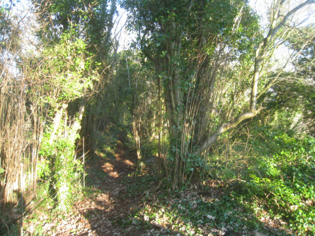 Exploring the railway embankment