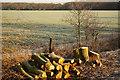 SK9071 : View to Old Wood : Week 5