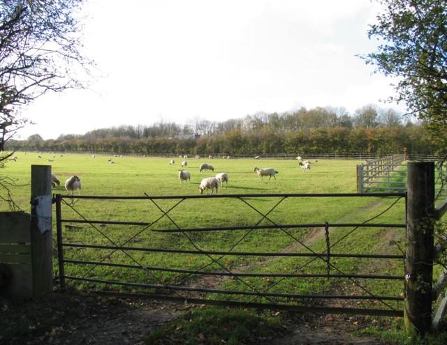 Field next to M1 motorway
