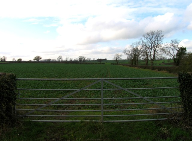 Gate and field westwards