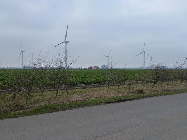 Red House Wind Farm, Gedney Marsh