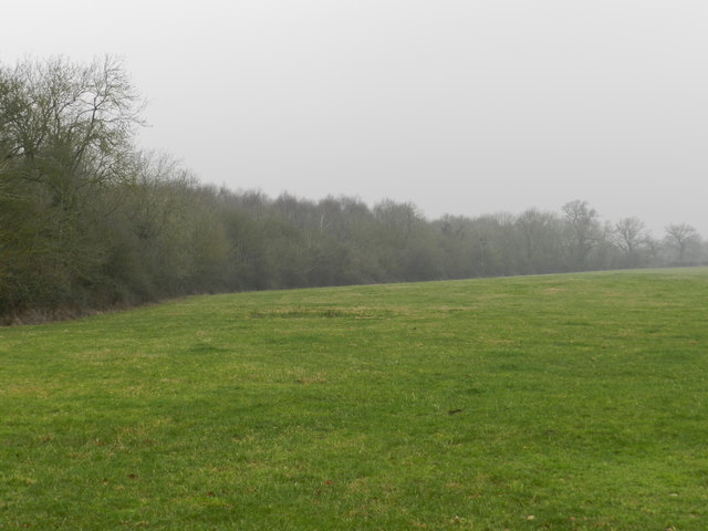 Field on the edge of Goosehill Wood