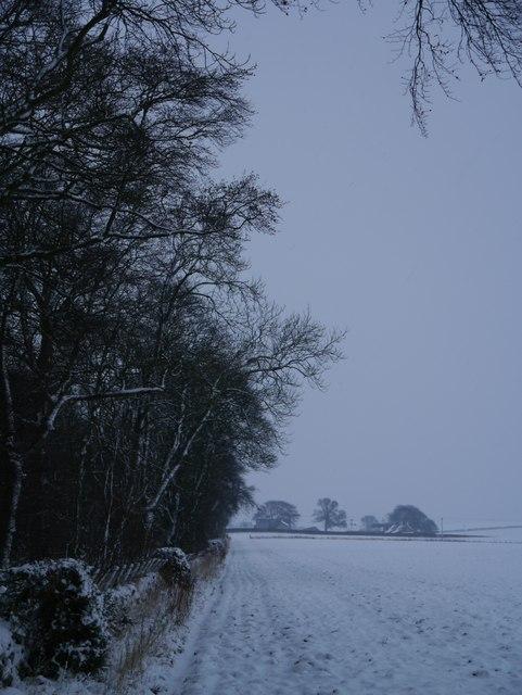 Moorshot Plantation: Towards Elwartlaw Farm Cottages
