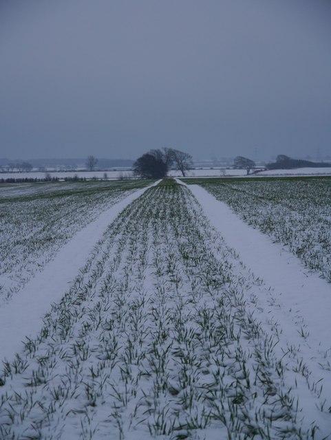Snowy Field Near Ploughlands