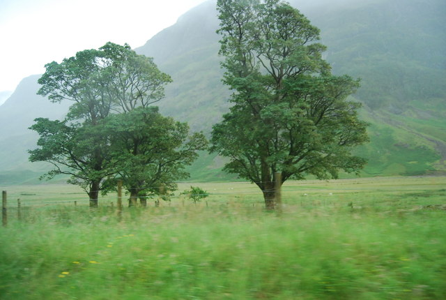Trees by the A82