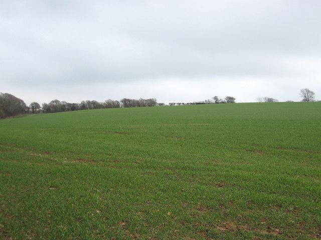 Footway Field