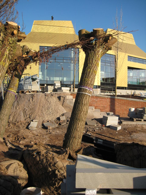 Trees in front of The Hive, Worcester