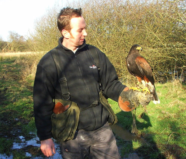 Hetty the Harris Hawk