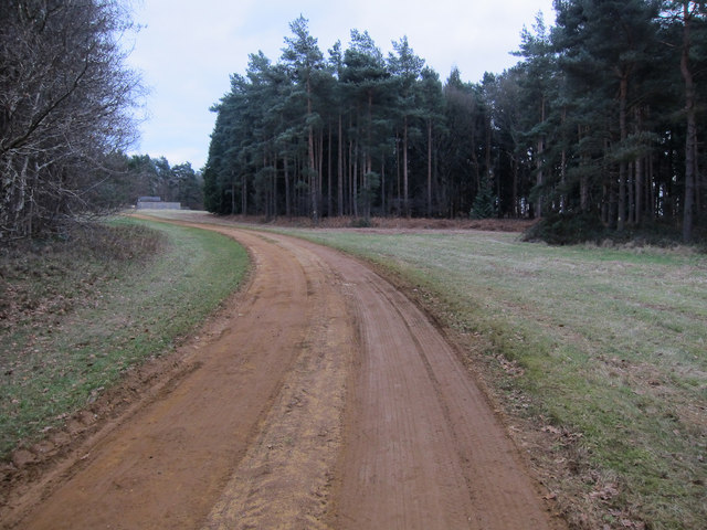 Restricted byway through Wellington Plantation