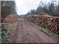 TL7791 : Logs ready for collection by Hugh Venables