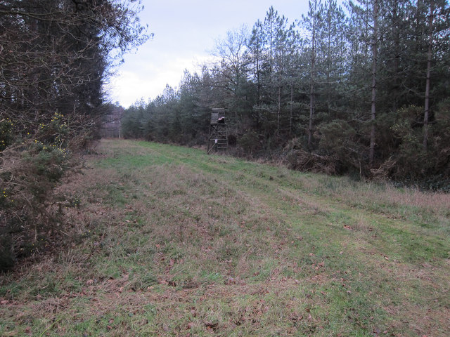Forest track, Mount Ephraim