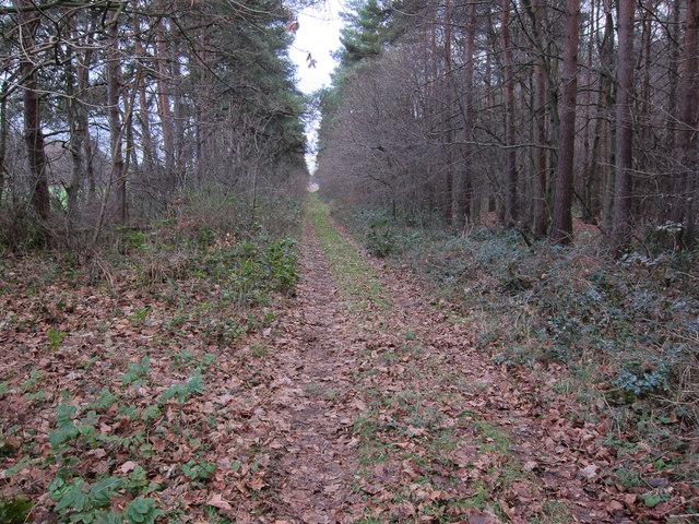 Pilgrim's Walk