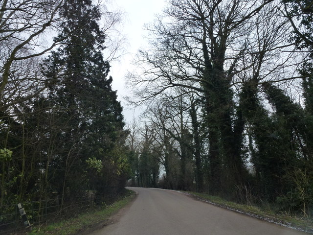 Trees on Durham's Road near Cardwell House