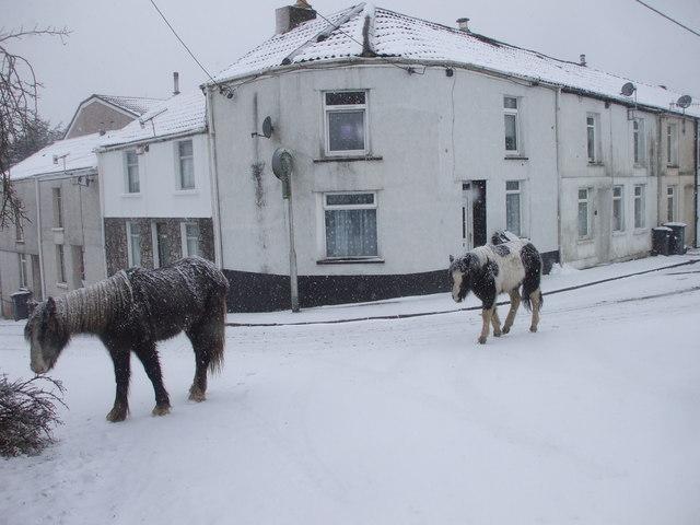 Ponies in the snow at Upper Row, Pen-y-wern