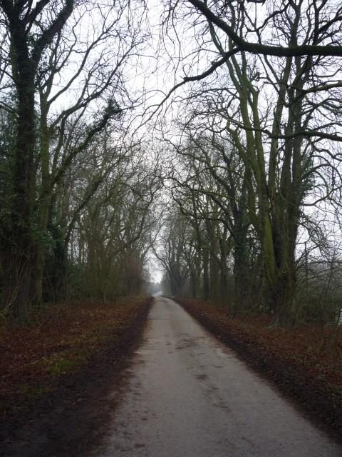 Treelined lane