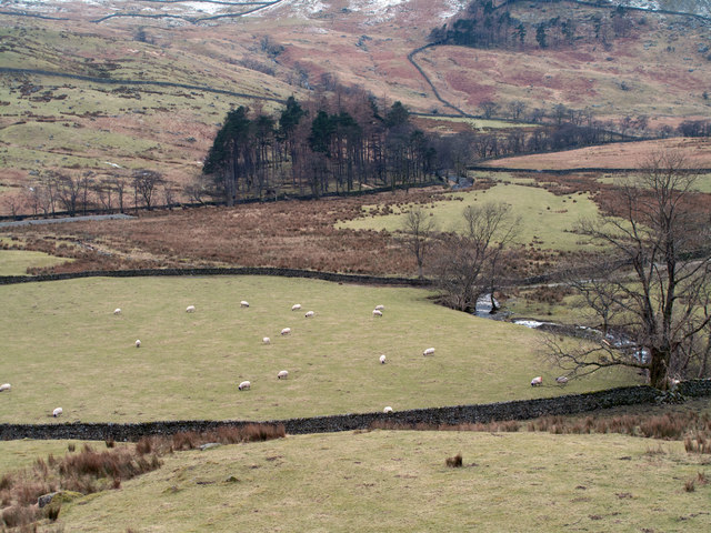 Clump of trees in upper Kentmere valley