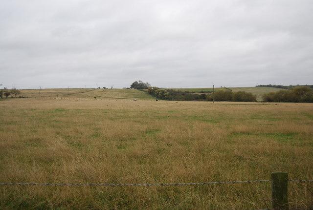 Grassland near Decoy Farm
