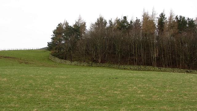 Roundel Wood, Hallmanor