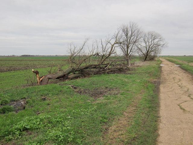 Long Holme Drove