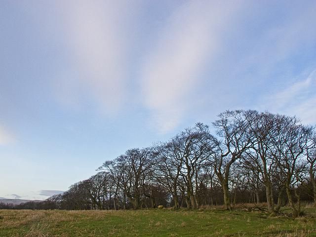 Field boundary near Pitfar