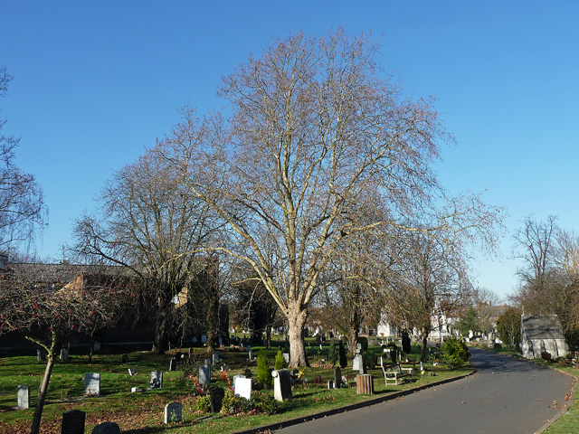 Path, West Norwood Cemetery (5)