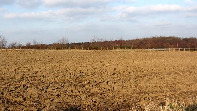 A long narrow field